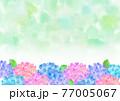 水彩 梅雨の紫陽花 背景フレーム 77005067