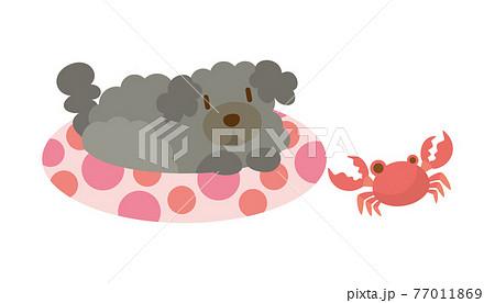 犬のイラスト いぬ イヌ dog 動物 プードル 77011869