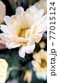 花 アップ 77015124