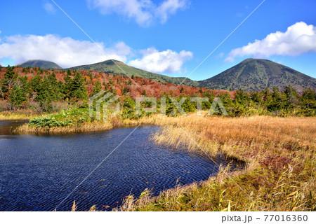 秋色の八甲田連邦と睡蓮沼 十和田八幡平国立公園 青森県  77016360