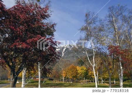 秋の羊蹄山 真狩 77018316