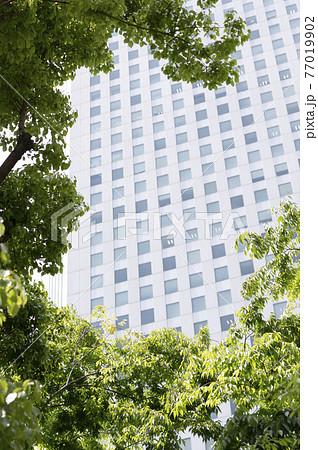 新緑と高層ビルの都市風景 77019902