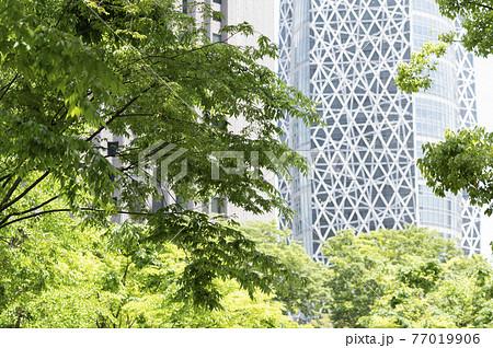 新緑と高層ビルの都市風景 77019906