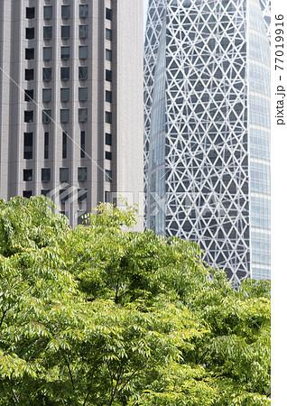 新緑と高層ビルの都市風景 77019916