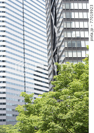 新緑と高層ビルの都市風景 77019923