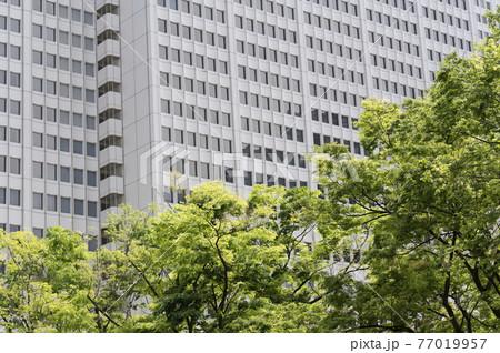 新緑と高層ビルの都市風景 77019957
