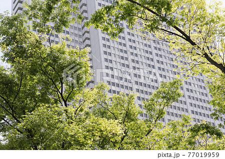 新緑と高層ビルの都市風景 77019959