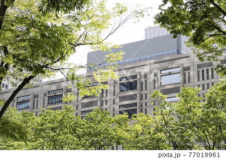 新緑と高層ビルの都市風景 77019961