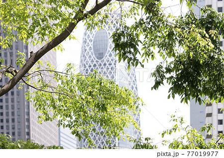 新緑と高層ビルの都市風景 77019977