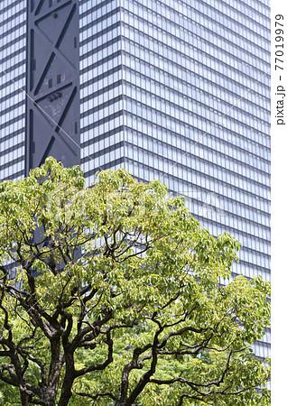 新緑と高層ビルの都市風景 77019979