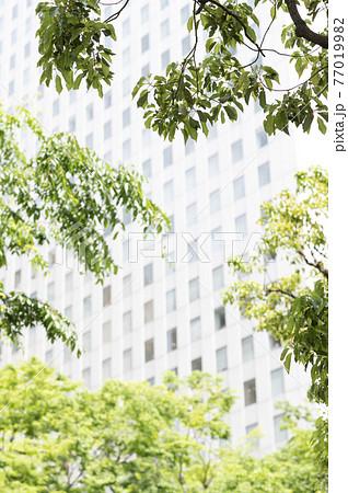 新緑と高層ビルの都市風景 77019982