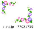 ピンクと紫のあさがお フレーム 77021735