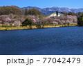 信州 長野県飯山市春の長峰スポーツ公園の針湖池の桜と飯山市民体育館 77042479
