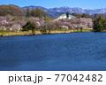 信州 長野県飯山市春の長峰スポーツ公園の針湖池の桜と飯山市民体育館 77042482