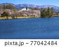 信州 長野県飯山市春の長峰スポーツ公園の針湖池の桜と飯山市民体育館 77042484