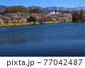 信州 長野県飯山市春の長峰スポーツ公園の針湖池の桜と飯山市民体育館 77042487