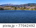 信州 長野県飯山市春の長峰スポーツ公園の針湖池の桜と斑尾山 77042492