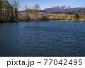 信州 長野県飯山市春の長峰スポーツ公園の針湖池の桜と斑尾山 77042495