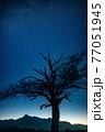 八ヶ岳高原野辺山の天の川と山梨の木の夜明け 77051945