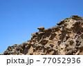 石見畳ヶ浦 浸食された岩 77052936