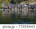 京都 伊根の舟屋(春)   77059443