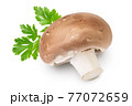 Royal Brown champignon isolated on white background with clipping path and full depth of field 77072659
