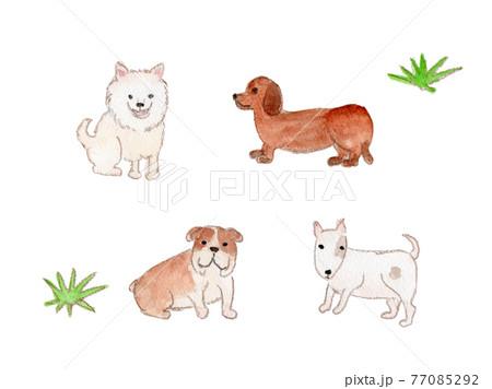 中型犬(スピッツ、ダックスフンド、ブルドック、ブルテリア)の水彩イラスト 77085292