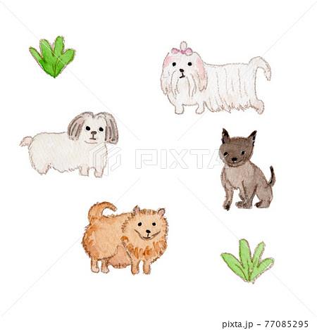 小型犬(マルチーズ、シーズー、チワワ、ポメラニアン)の水彩イラスト 77085295