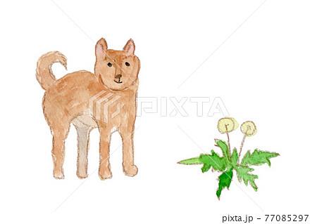 柴犬とたんぽぽの綿毛の水彩イラスト 77085297