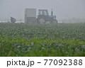 八ヶ岳高原野菜の霧の中の穫り入れとトラクター 77092388