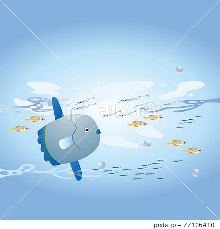 海を泳ぐマンボウと魚の群れ 77106410