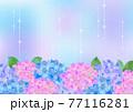梅雨の紫陽花 背景フレーム 77116281