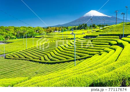 《静岡県》富士山と茶畑の風景 77117674