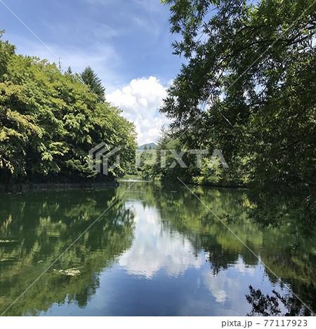 長野県の軽井沢の観光名所である雲場池の夏の風景 77117923