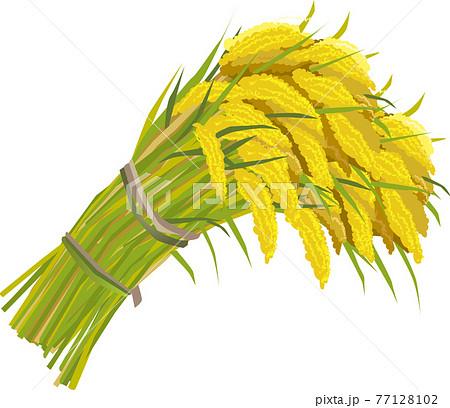 稲束のベクターイラスト 77128102