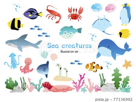 海の生き物セット 77136992