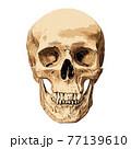 Human skull isolated 77139610