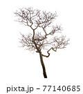 Dead tree 77140685
