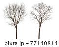 Dead tree 77140814