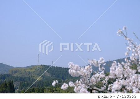 桜の咲く春の季節と山をつなぐ鉄塔の風景 77150555