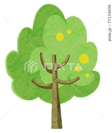 新緑の木 77159936