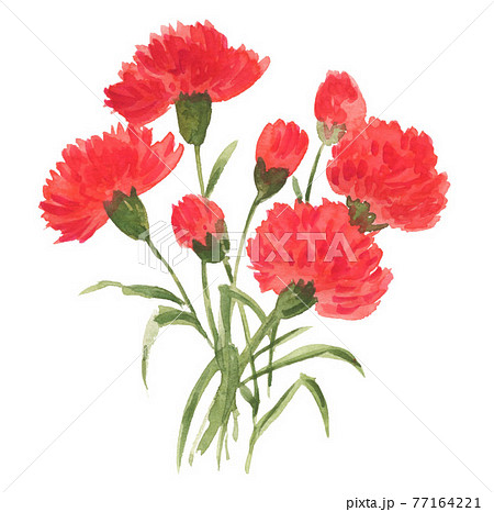 carnation21501pix7 77164221