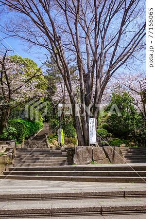 西郷従道邸跡付近に造られた西郷山公園(目黒区青葉台、菅刈公園と隣接) 77166065