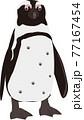 ケープペンギン 77167454