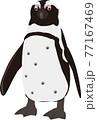 ケープペンギン 77167469