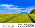 静岡県富士市の美しい茶畑 77172559