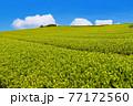 静岡県富士市の美しい茶畑 77172560
