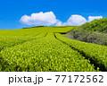 静岡県富士市の美しい茶畑 77172562