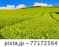静岡県富士市の美しい茶畑 77172564