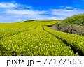 静岡県富士市の美しい茶畑 77172565